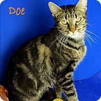 Adopt A Pet :: Doe - Sherwood, OR