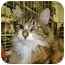 Photo 1 - Domestic Longhair Cat for adoption in Proctor, Minnesota - Benjamin