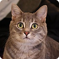 Adopt A Pet :: Twinkle - Xenia, OH