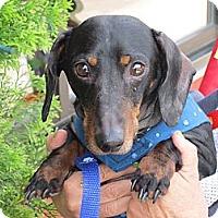 Adopt A Pet :: OTIS - Portland, OR