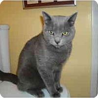 Adopt A Pet :: Rudy - Arlington, VA