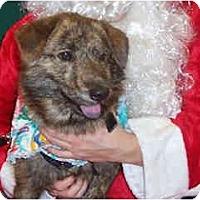 Adopt A Pet :: Maxim - Scottsdale, AZ