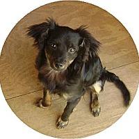 Adopt A Pet :: **MAXX** - Rockaway, NJ