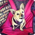 Adopt A Pet :: Richie