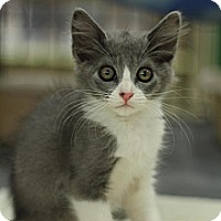 Adopt A Pet :: Monster - Sacramento, CA