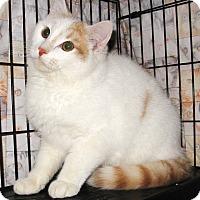 Adopt A Pet :: Gavin - Colmar, PA