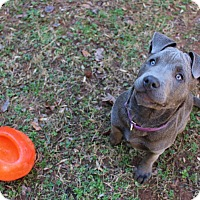 Adopt A Pet :: LuLu - Atlanta, GA