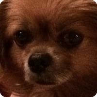 Adopt A Pet :: Jake - Fennville, MI