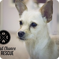 Adopt A Pet :: Rita - Las Vegas, NV