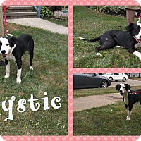Adopt A Pet :: Mystic - DOVER, OH