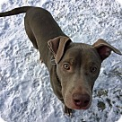 Adopt A Pet :: Morpheus