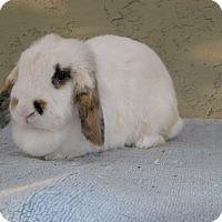 Adopt A Pet :: Skittles - Bonita, CA