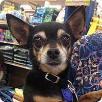 Adopt A Pet :: Baxter - Studio City, CA