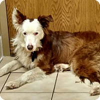 Adopt A Pet :: Cowboy-New Update 4/30! - Midwest (WI, IL, MN), WI