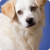 Adopt A Pet :: Toby - DRD program - Owensboro, KY
