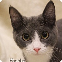 Adopt A Pet :: Phoebe - Foothill Ranch, CA
