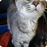 Adopt A Pet :: Bedelia - Chippewa Falls, WI