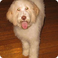 Adopt A Pet :: Dennison - New Middletown, OH
