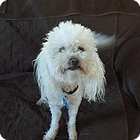 Adopt A Pet :: Sissy - El Cajon, CA