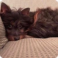 Adopt A Pet :: Toby - Hockessin, DE