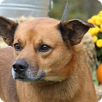 Adopt A Pet :: Buddy (Neutered) - Marietta, OH