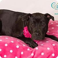 Adopt A Pet :: *GEORGIA - Camarillo, CA
