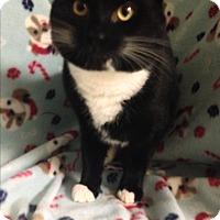Adopt A Pet :: Scully - Rockaway, NJ