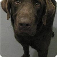 Adopt A Pet :: 17-01-0010 Eyeore - Dallas, GA