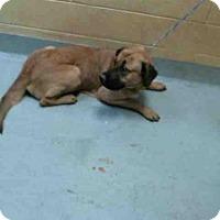 Adopt A Pet :: SADIE - Tulsa, OK