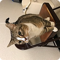 Adopt A Pet :: Jingle - Plainville, MA