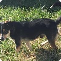 Adopt A Pet :: Baxster - Vacaville, CA