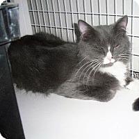 Adopt A Pet :: Jackie O - Gunnison, CO