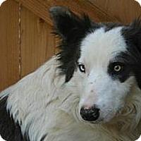 Adopt A Pet :: Tara - Bellevue, NE
