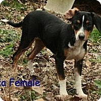 Adopt A Pet :: Frica ADOPTION PENDING - Danbury, CT