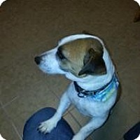 Adopt A Pet :: Luke - Marlton, NJ