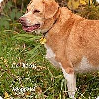 Adopt A Pet :: Le'Mon - Westfield, NY