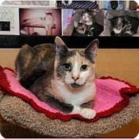 Adopt A Pet :: Elphaba - Farmingdale, NY