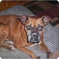 Adopt A Pet :: Klowee - Thomasville, GA
