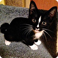 Adopt A Pet :: Roman - Seminole, FL