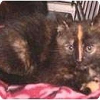 Adopt A Pet :: Pandora - Putnam Valley, NY