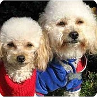 Adopt A Pet :: Luke & Logan - La Costa, CA