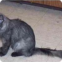 Adopt A Pet :: Kimberly - Simms, TX