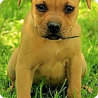 Adopt A Pet :: Lala - Staunton, VA