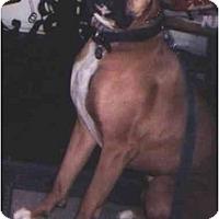 Adopt A Pet :: Homer - Los Alamitos, CA