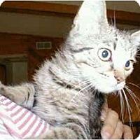 Adopt A Pet :: Pluto - Proctor, MN