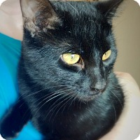 Adopt A Pet :: Black Knight - Green Bay, WI