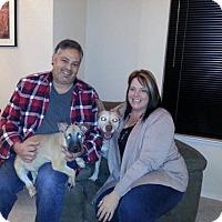 Adopt A Pet :: Hendrix - Sacramento, CA