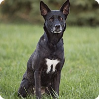Adopt A Pet :: Tippy - Drumbo, ON