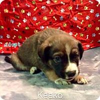 Adopt A Pet :: Keeko - Broken Arrow, OK