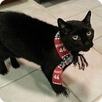 Adopt A Pet :: Spike - Palatine, IL